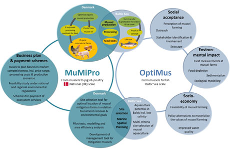 MumiPro-OPTIMUS interaction